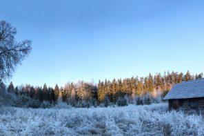 Peapreemia. Autor: Tuule Müürsepp. Võrumaa, Antsla vald, Ähijärve küla. Žürii kommentaar: lummav, mitmekihiline, selle pildi sees tahaks olla.