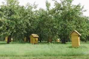 Kurgja-Linnutaja talupidamises oli oluline koht viljapuudel ja mesindusel