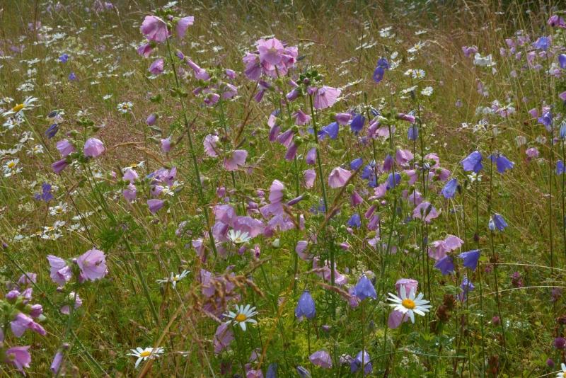 Loopealne lilleaas koduaias